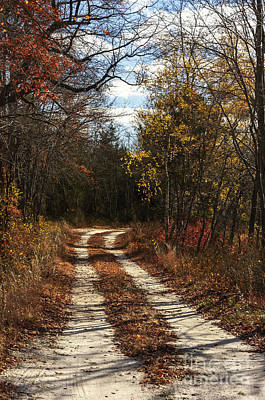 Photograph - Pine Barrens Road I by Debra Fedchin