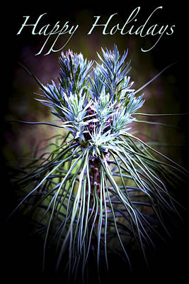 Photograph - Pine Bouquet - Happy Holidays by Patricia Sanders