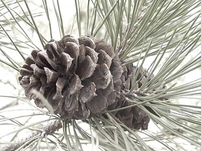Photograph - Pine Branch by Angi Parks
