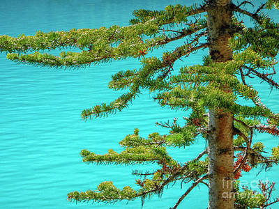 Photograph - Pine Branches And Blue Water by Patricia Hofmeester