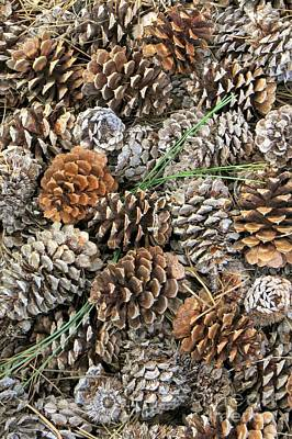 Photograph - Pine Cone Carpet by Frank Townsley