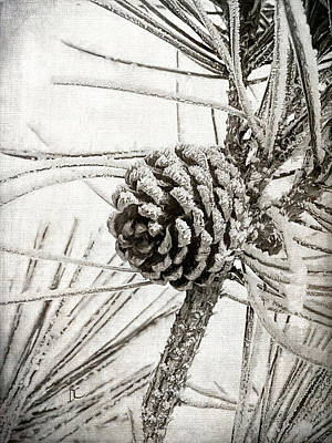 Digital Art - Pine Cone Frost by Diane Chandler