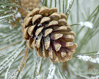Photograph - Pine Cone In Winter_1000117_083a by Donna Sizemore