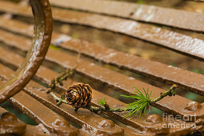 Photograph - Pine Cone by Jim Orr