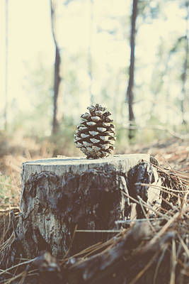 Pine Cone Original by Marco Oliveira