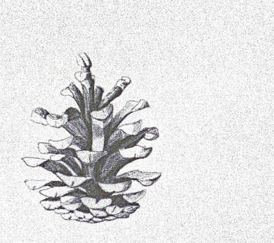 Pine Cone Study				 Print by Lisa Le Quelenec