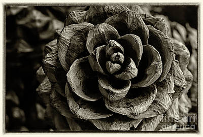 Photograph - Pine Cone Textures Black And White by Karen Adams