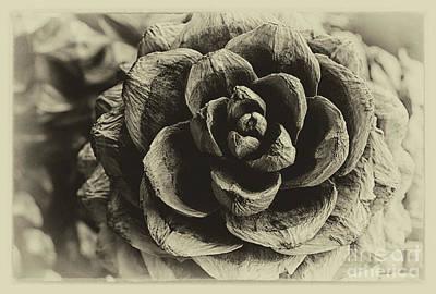 Photograph - Pine Cone Textures Vintage by Karen Adams