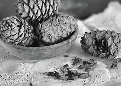 Photograph - Pine Cones And Nuts by Olga Hamilton