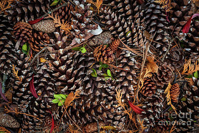 Small Forest. Beauty Photograph - Pine Cones by Elena Elisseeva