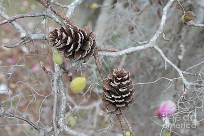 Pine Cones Photograph - Pine Cones In Gray by Carol Groenen