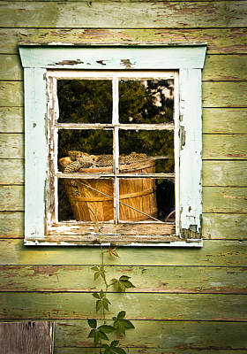 Pine Cones In The Window Print by Maggie Terlecki