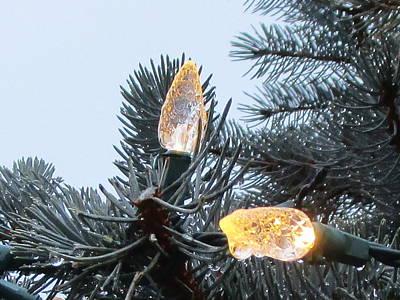 Photograph - Pine Cones by Kazumi Whitemoon