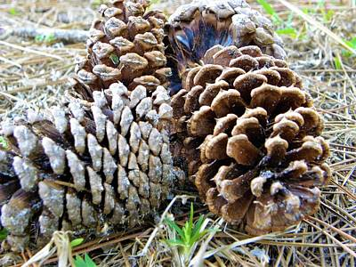 Tree Photograph - Pine Cones by Ric Schafer