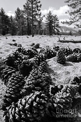 Photograph - Pine Cones, Trees And Mountains by Cathie Richardson