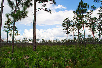 Pine Flatwoods Art Print by Steven Scott