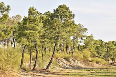 Photograph - Pine Forest Algarve Portugal by Marek Stepan