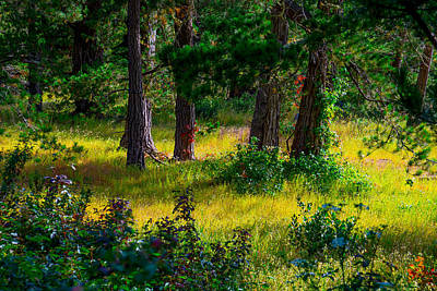 Photograph - Pine Forest by Derek Dean