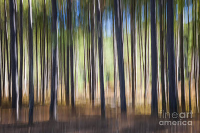 Blur Photograph - Pine Forest by Elena Elisseeva