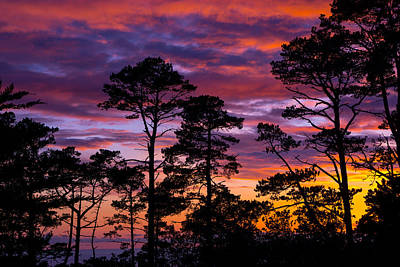 Photograph - Pine Forest Sunset by Derek Dean