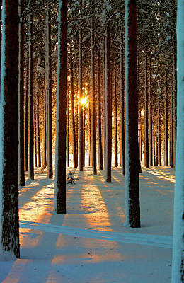 Trees In Snow Photograph - Pine Forest by www.WM ArtPhoto.se