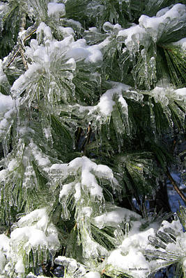 Photograph - Pine Frosting by Mark Alesse