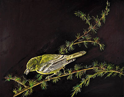 Painting - Pine Grosbeak by Carol Hanna