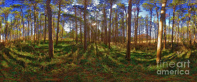 Photograph - Pine Grove 360 by Tom Jelen
