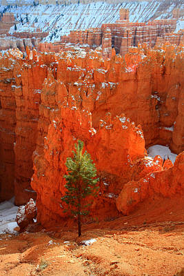 Pine Hoodoos At Bryce Canyon Art Print by Pierre Leclerc Photography