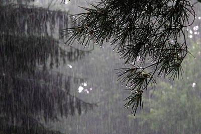 Photograph - Pine In Rain by David Coblitz
