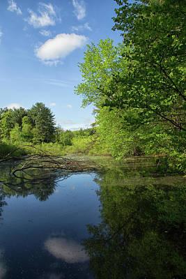 Photograph - Pine Lake by Karol Livote