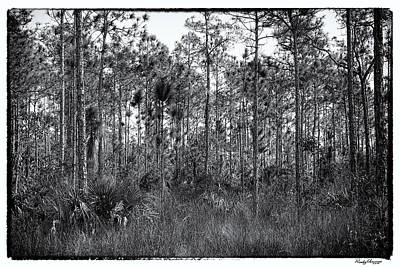 Pine Land In B/w Art Print by Rudy Umans