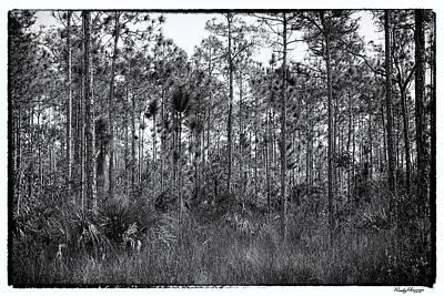 Pine Land In B/w Art Print by Rudy Umans