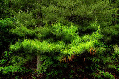 Pine Needles Photograph - Pine by Mike Eingle