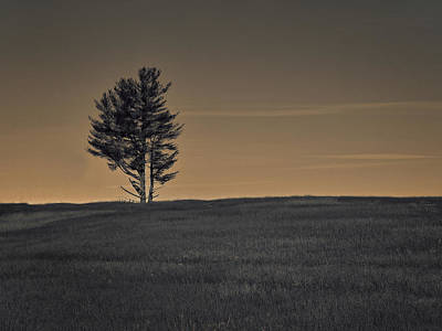 Photograph - Pine by Mim White