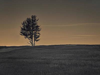 Photograph - Pine by Mim White