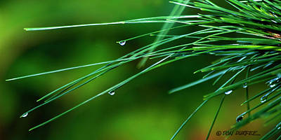 Photograph - Pine Needle Raindrops by Don Durfee