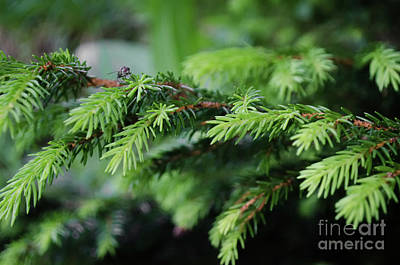 Photograph - Pine Needles And A Fly by Michelle Meenawong