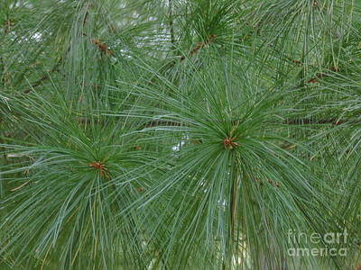 Painting - Pine Needles by Daun Soden-Greene