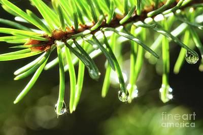 Pine Needles Photograph - Pine Needles by Jimmy Ostgard