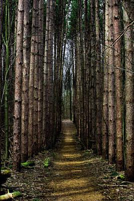 Pine Path  Art Print