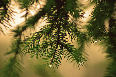 Art Print featuring the photograph Pine by Robert Geary