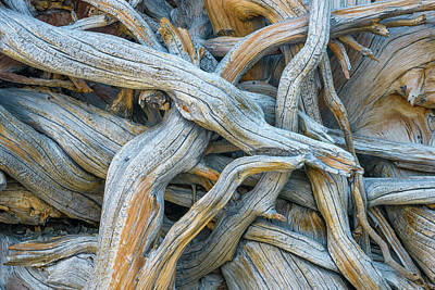 Photograph - Pine Rootstock by Alexander Kunz