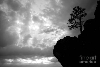 Photograph - Pine Silhouette by Idaho Scenic Images Linda Lantzy