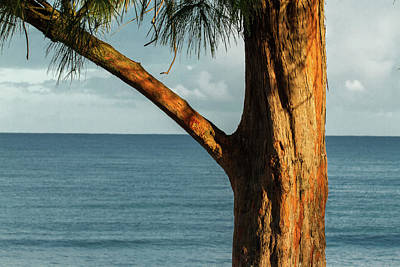 Photograph - Pine The Ocean by MotionOne Studios