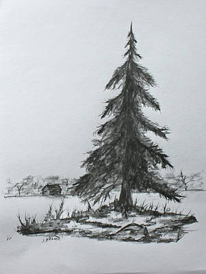 Drawing - Pine Tree  171229 by Jack G Brauer