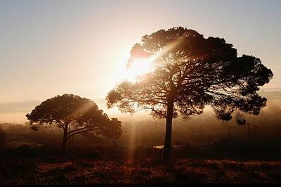 Photograph - Pine Tree At Sunrise by Dora Hathazi Mendes