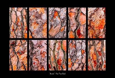 Photograph - Pine Tree Bark Textures by Lexa Harpell