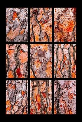 Photograph - Pine Tree Bark Textures Portrait by Lexa Harpell