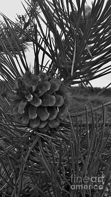 Photograph - Pine Tree by Deborah DeLaBarre